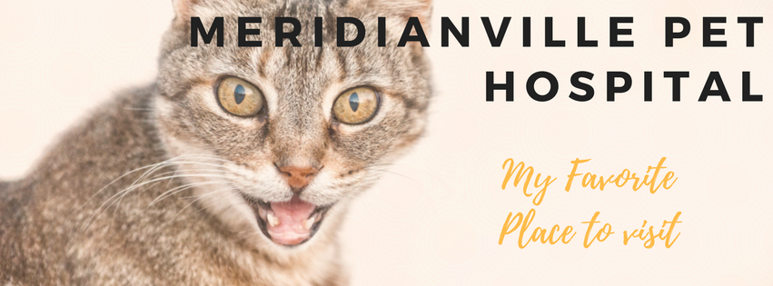 Meridianville Pet Hospital: 132 General Harbin Blvd, Meridianville, AL