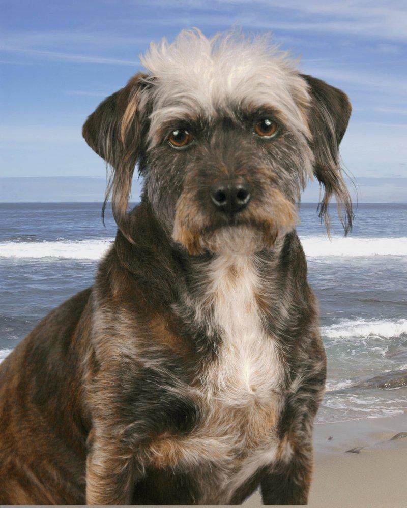 Unleashed Pet Spa: 14219 Walsingham Rd, Largo, FL