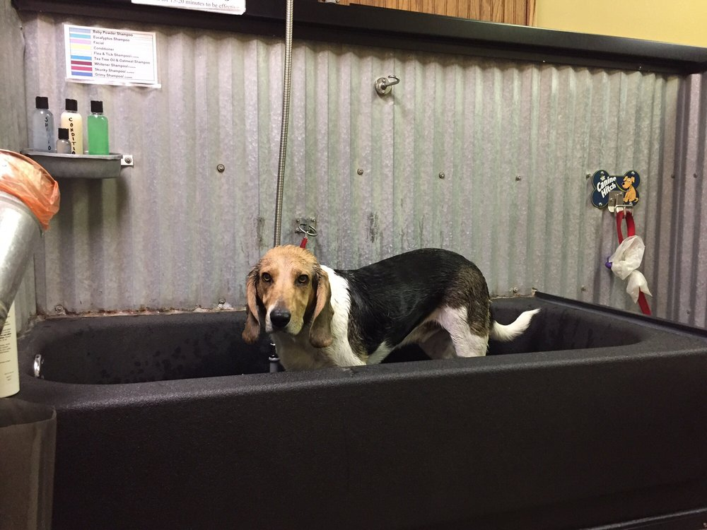 U dirty dog grooming / Hotels in nola