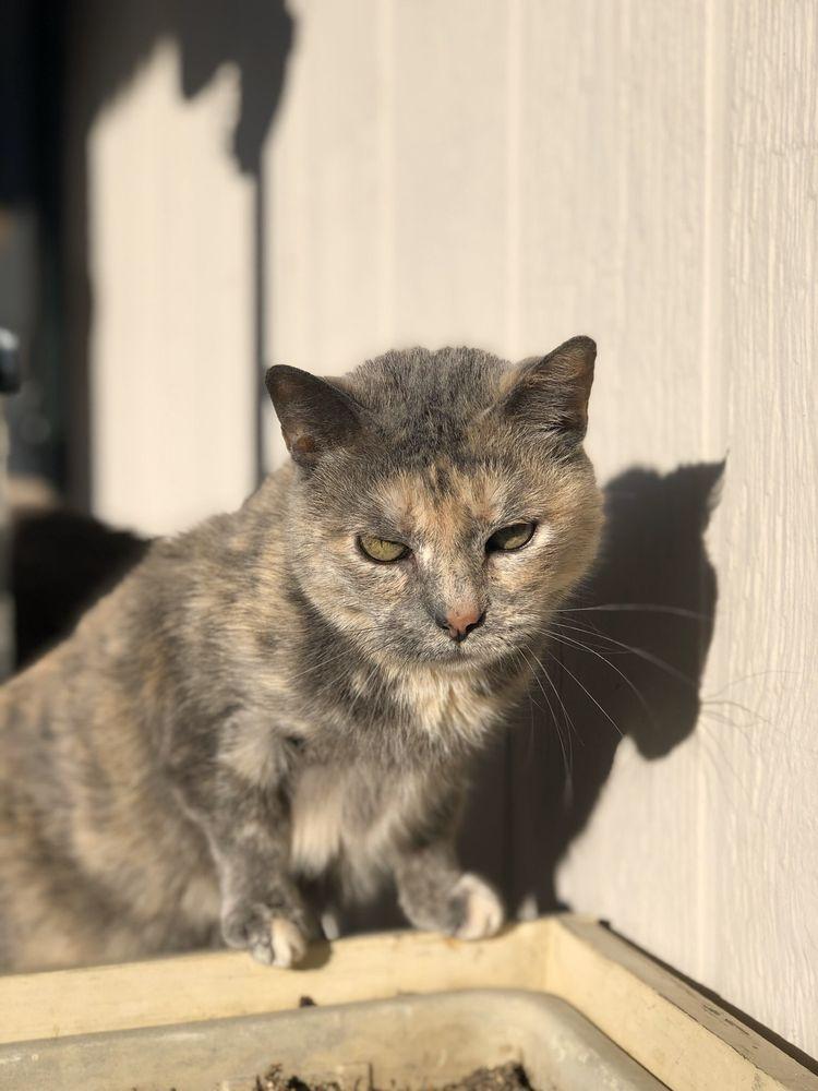 Good Life Veterinary Care: 1475 N Dilleys Rd, Gurnee, IL
