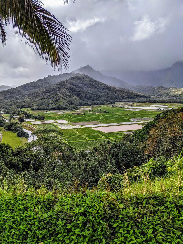 Hanalei Valley Lookout: Kuhio Hwy, Princeville, HI