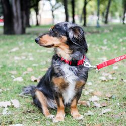 DogIDs Pet Stores Th St N Fargo ND Phone Number Yelp - What is invoice number on receipt online pet store