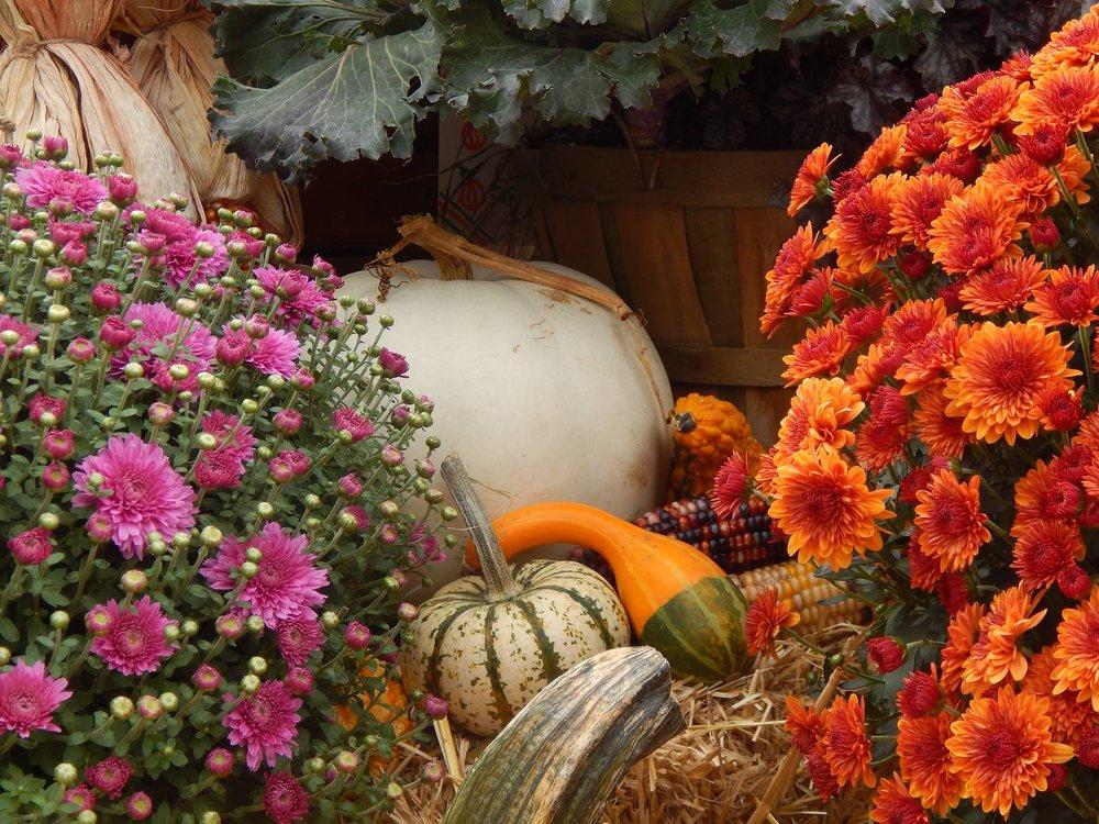Prairie View Garden Center and Farm Market: 48W130 IL Rte 72, Hampshire, IL