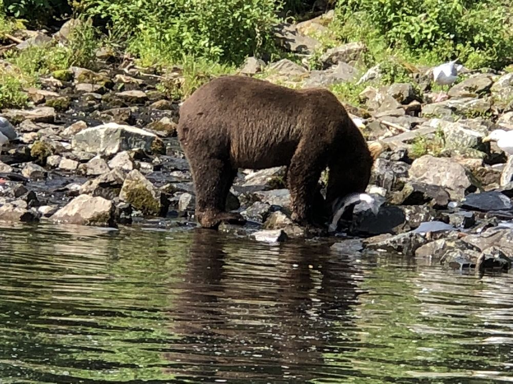All Alaska Outdoors: 35905 Ryan Ln, Soldotna, AK