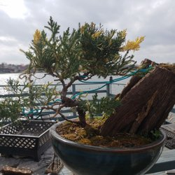 Bent Tree Bonsai Nurseries Gardening 5915 S Rell Hill Rd Dallas Tx Phone Number Yelp