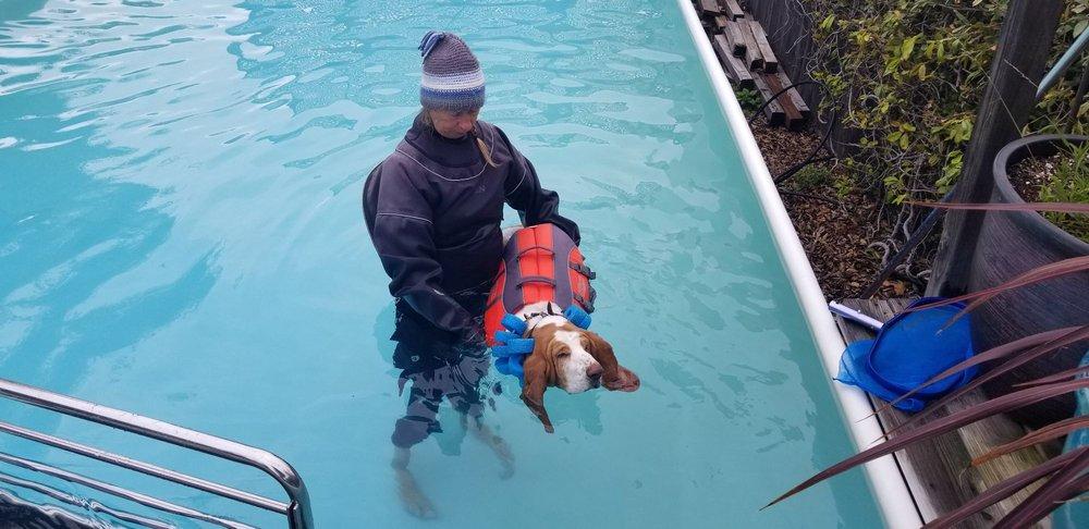 Splash-Dog Swim Therapy