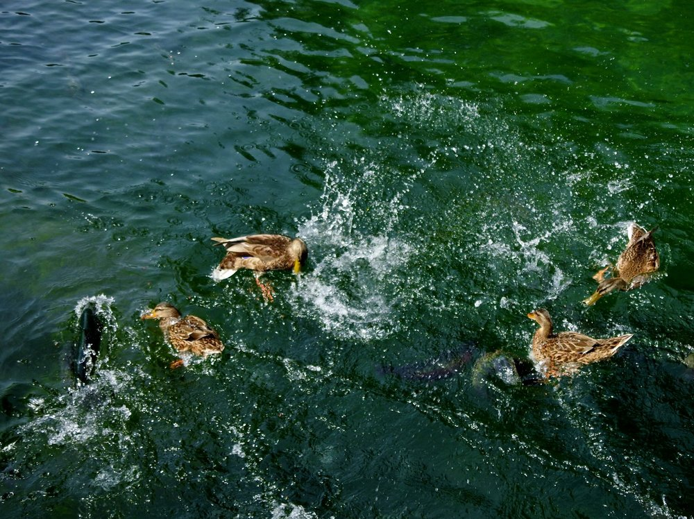 Oden State Fish Hatchery: 8258 S Ayr Rd, Alanson, MI
