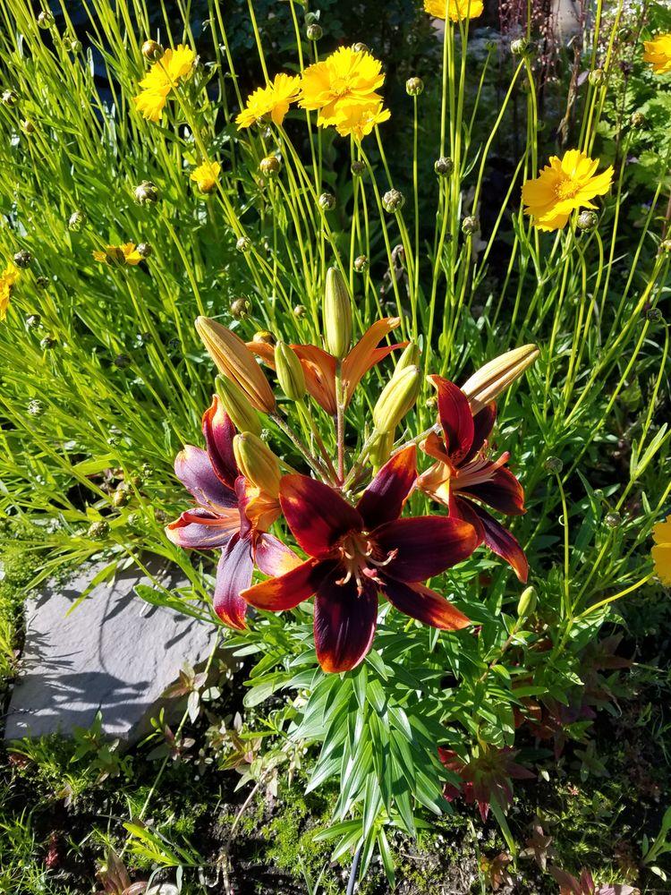 Roots Nursery & Landscape: 6710 Tieton Dr, Yakima, WA