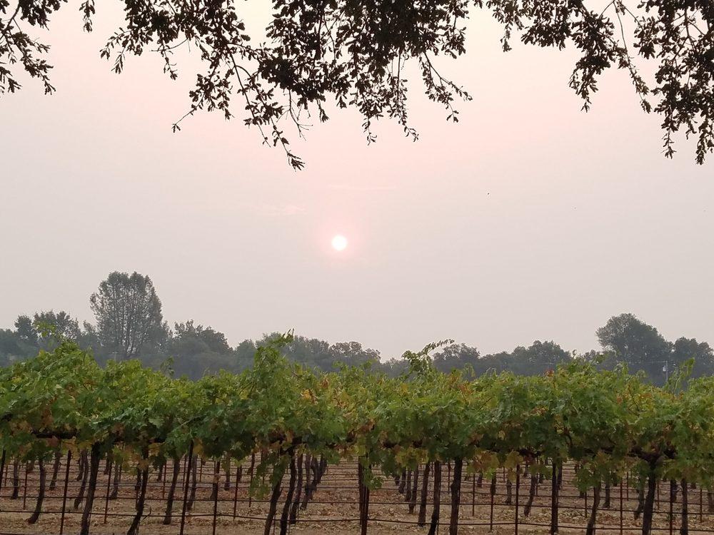 Burnsini Vineyards: 19535 Hammers Ln, Cottonwood, CA