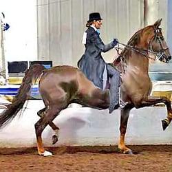 Star Galaxy Stables Closed Horseback Riding 850 Babler Park Dr