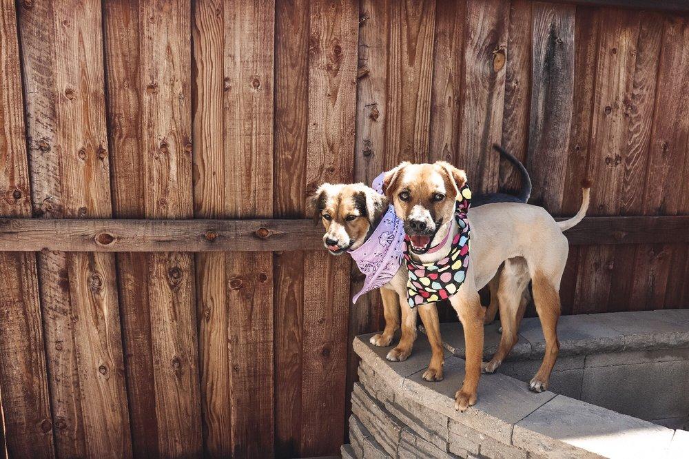 Animal Kingdom: 2861 S La Cadena, Colton, CA