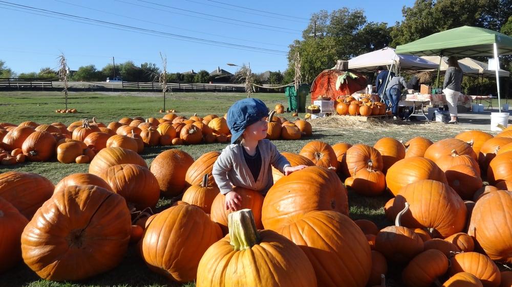Tucker Hill Pumpkinville: 2100 State Blvd, McKinney, TX
