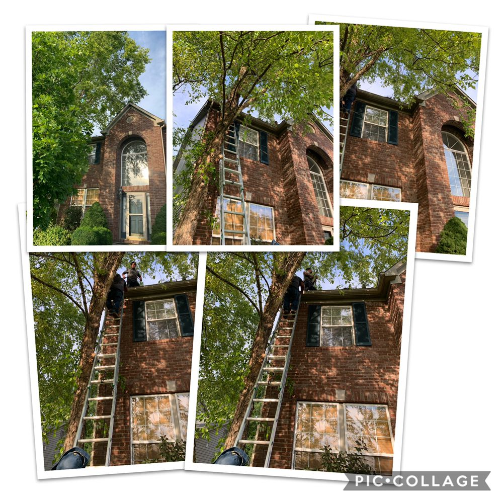 WL Landscaping & Cleaning: 4327 Aspen Way, Indianapolis, IN