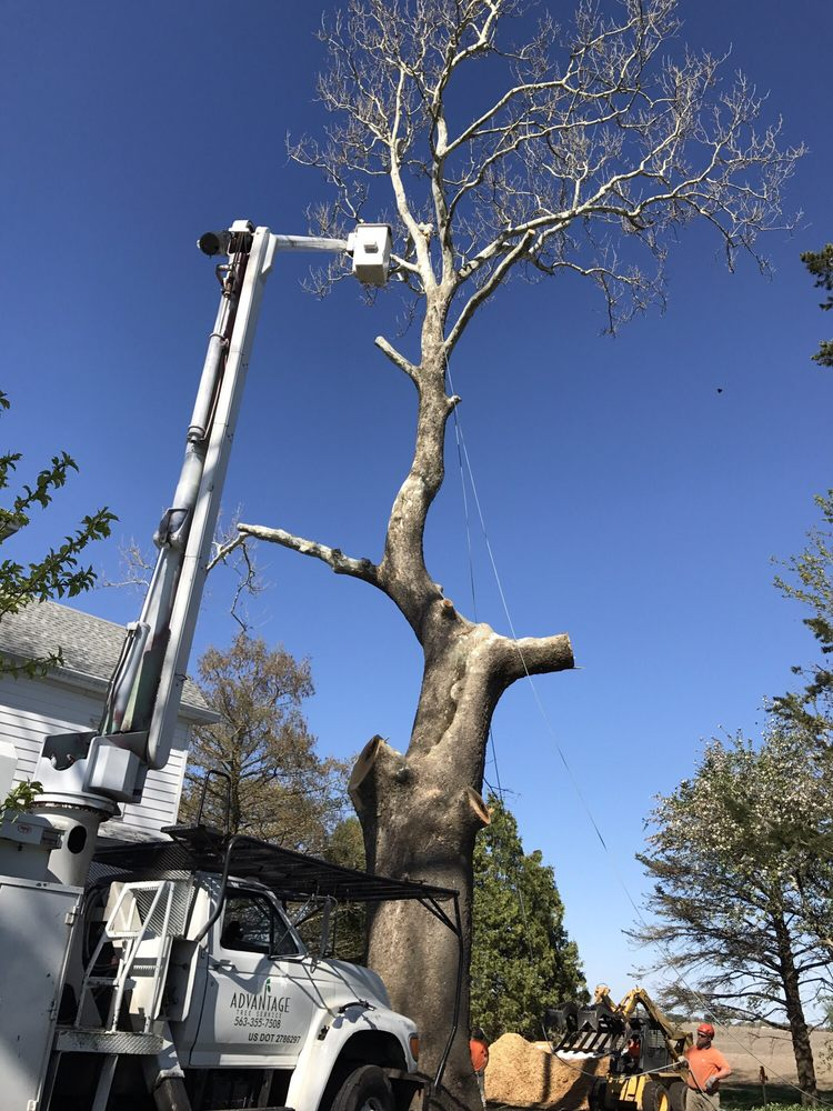 Advantage Tree Service: 3100 Hickory Grove Rd, Davenport, IA