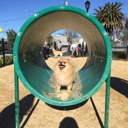 Main Street Dog Agility Park Redwood City Ca