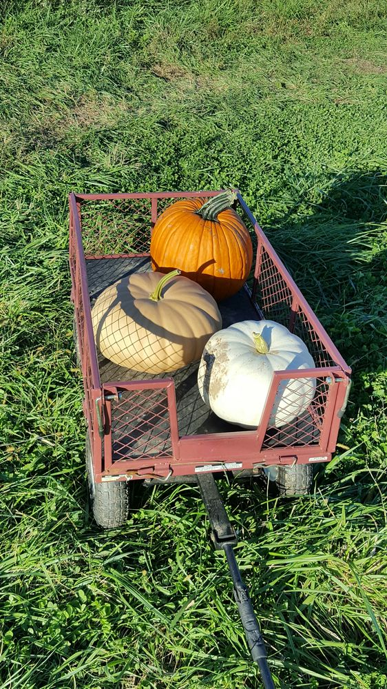 Yankey Farms: 14039 Owls Nest Rd, Nokesville, VA