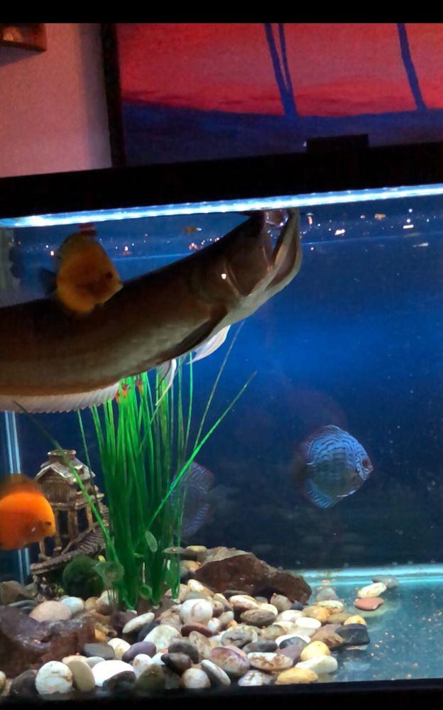Happy Fish Pets