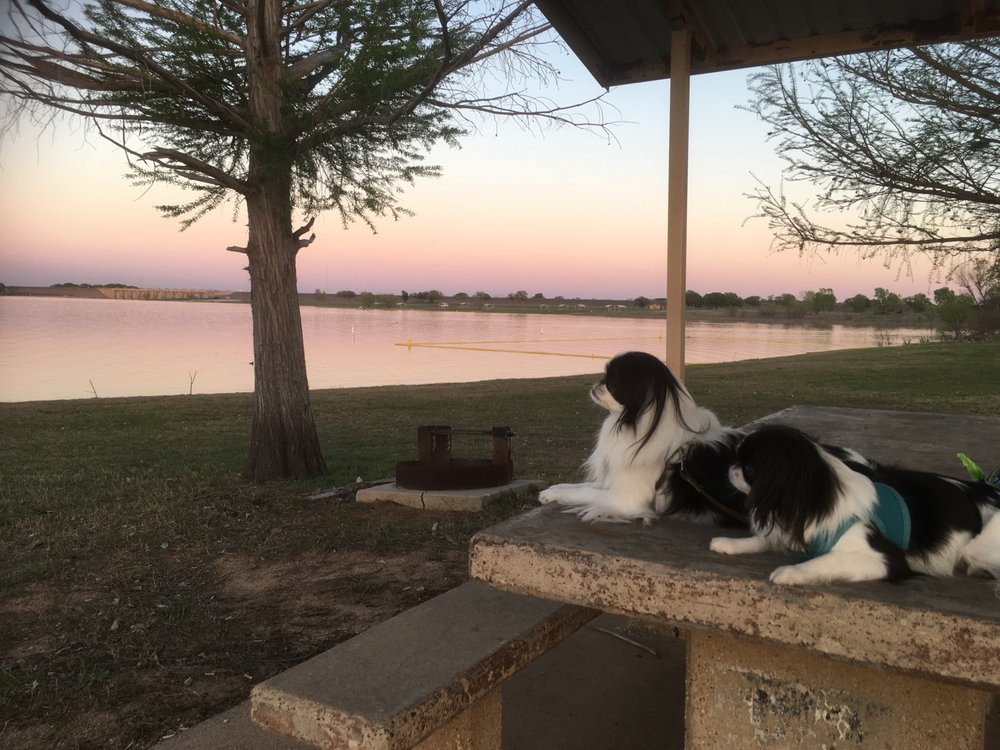 Conway Veterinary Clinic: 1100 Hwy 3381, Comanche, TX