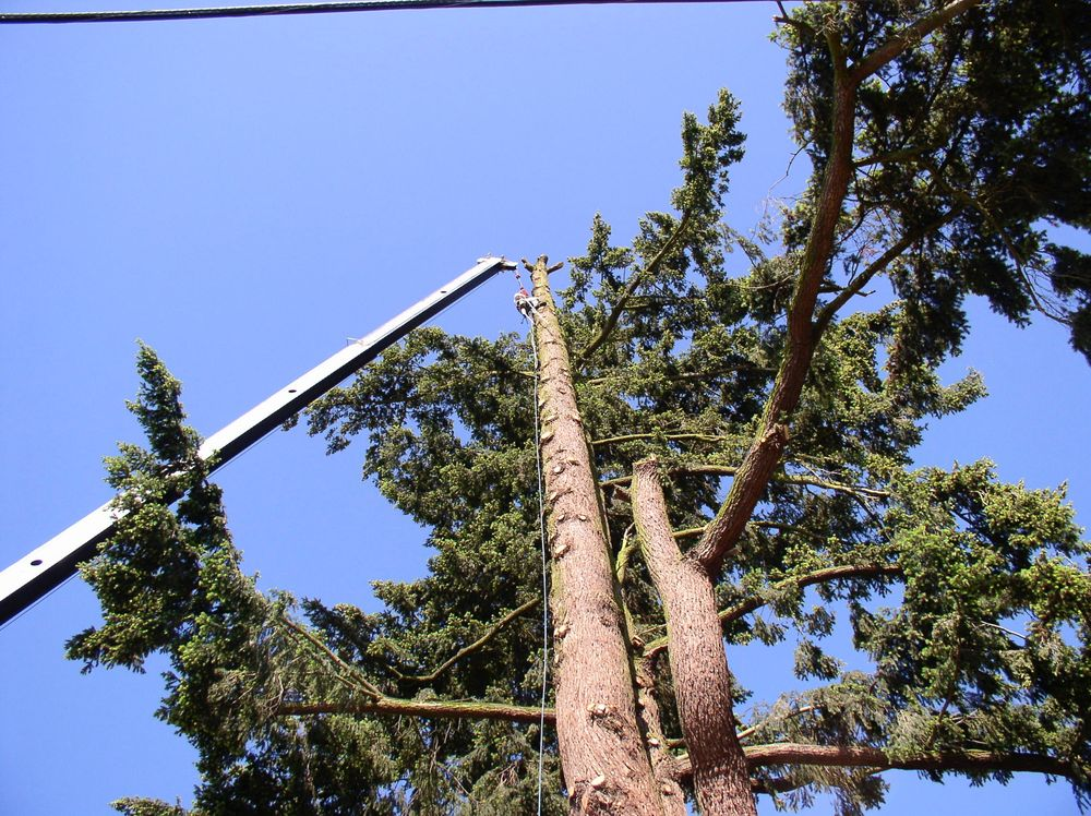 North Woods Tree Service: West Linn, OR