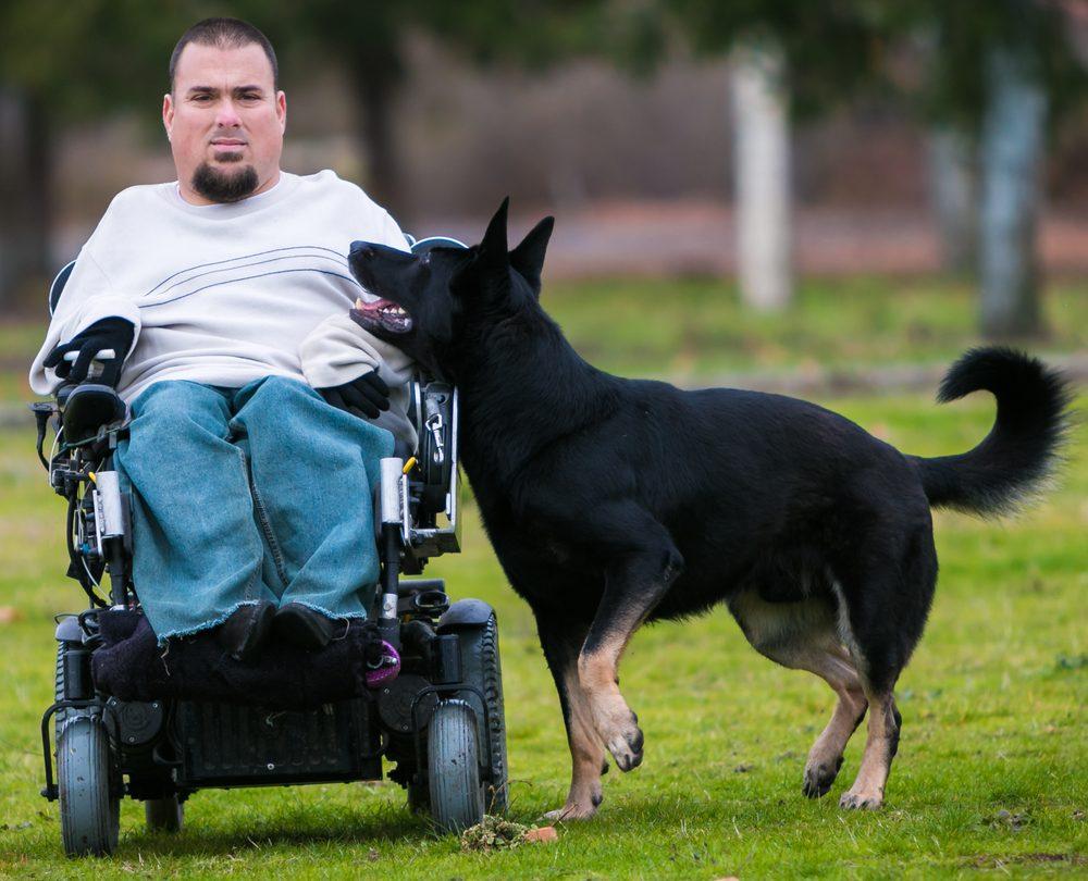 Prodogz Dog Training