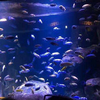 The New York Aquarium 416 Photos 307 Reviews Zoos