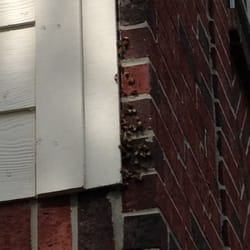 Photo Of Houston Bee Removal Spring Tx United States Swarm Had