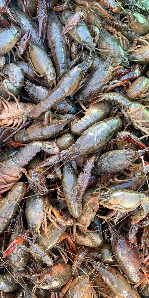 Crawdaddy Seafood Thibodaux: 802 St Mary St, Thibodaux, LA