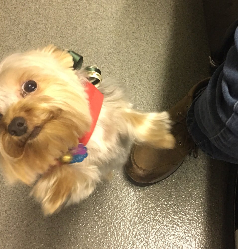 Logan's Pet Grooming & Daycare: 2962 Highway 83, Hartford, WI