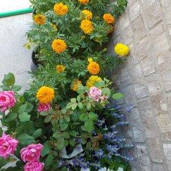 photo of houston garden centers katy tx united states - Houston Garden Centers
