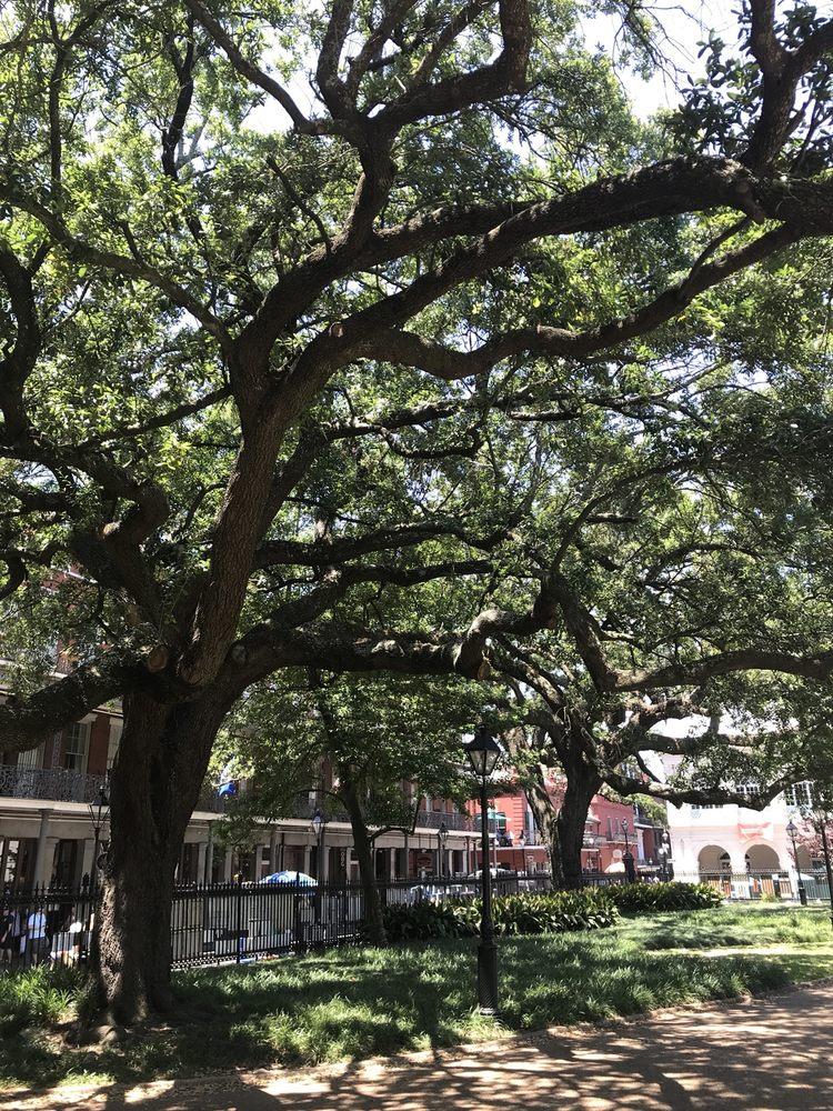 Beautiful Huge Strong Glorious Magnolia Tree Yelp