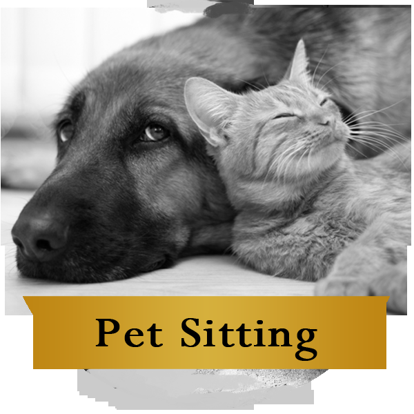 A Better Way Pet Sitting Service: Burlington, MA
