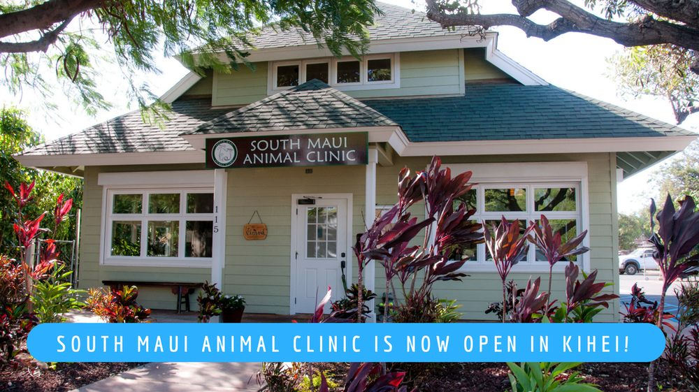 South Maui Animal Clinic: 115 Kio Loop, Kihei, HI