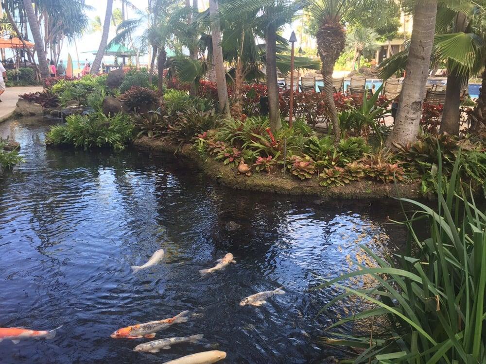 Hilton Hawaiian Village Waikiki Beach Photo Gallery: Koi, Ducks, Turtles And Parrots All Around The Village.