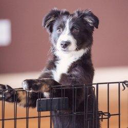 Wag The Dog - 18 Reviews - Pet Training - Williamsburg