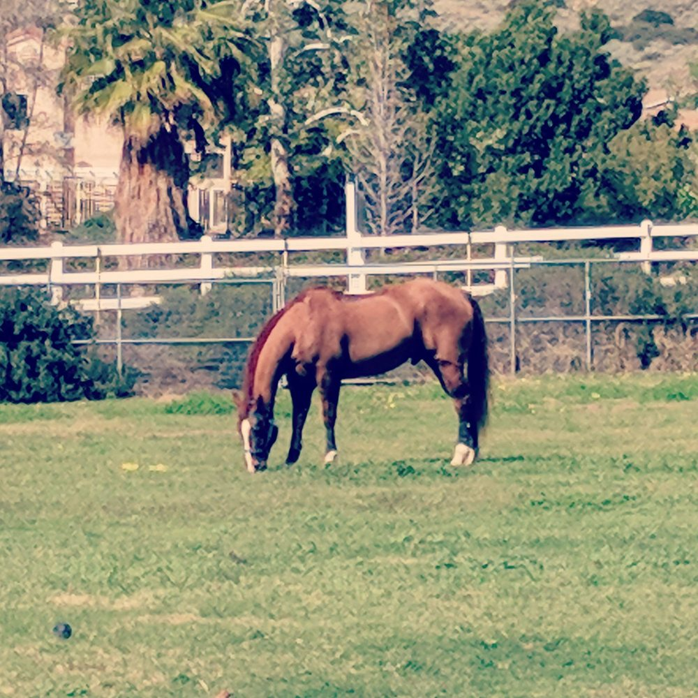 Shadow Ridge Equestrian Center: 7256 Weaver St, Highland, CA