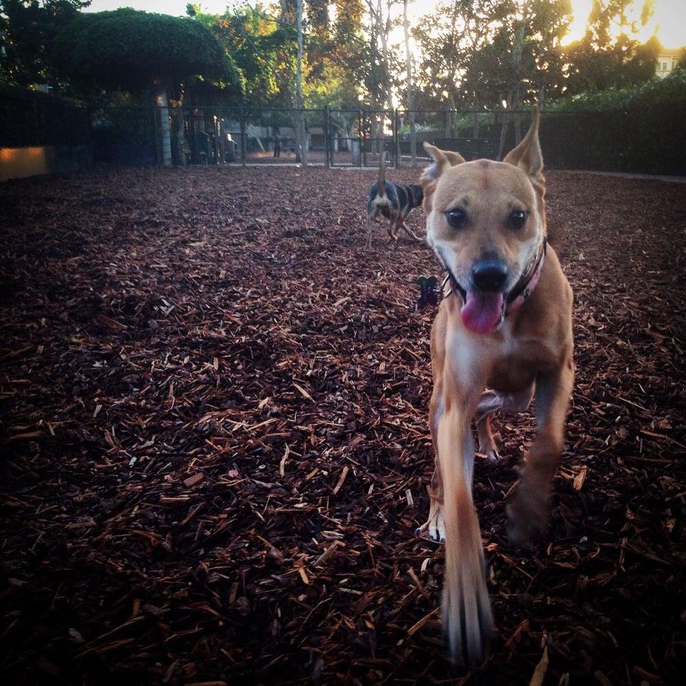 Dog Day Care Phoenix