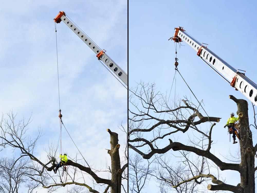 Klismith Tree Service: 901 W Ford Harris Rd, Champaign, IL