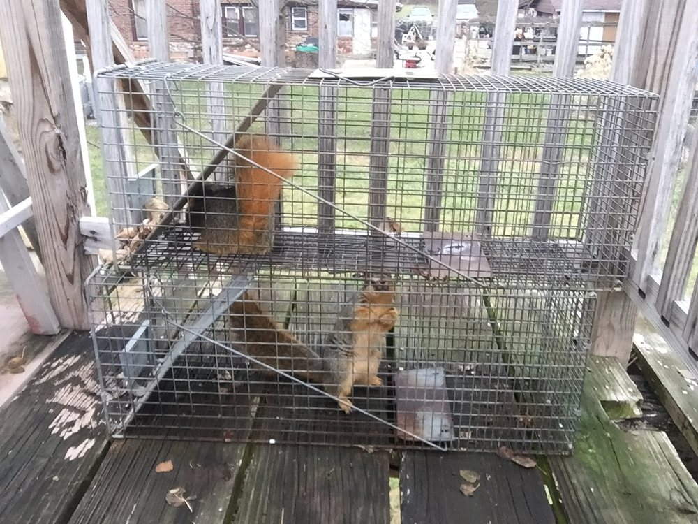 Critter Removal Indianapolis