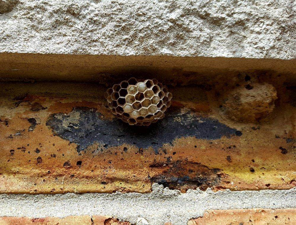 Kettle Moraine Pest Control: Dousman, WI