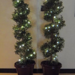 photo of mias garden plants tree rental homestead fl united states - Christmas Tree Rental