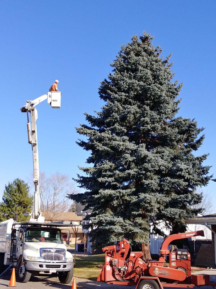 Arborist Arms Tree Company