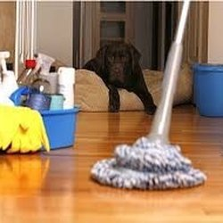 Best Apartment Cleaning near Logan Square, Chicago, IL 60647 ...