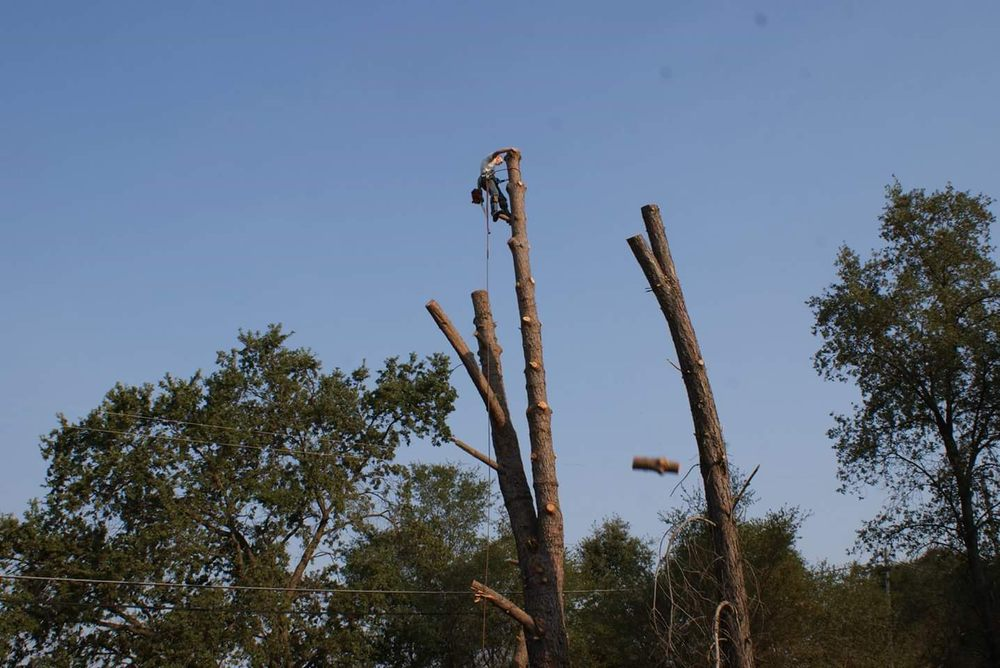 Nate Foster Tree Care: Columbia, SC