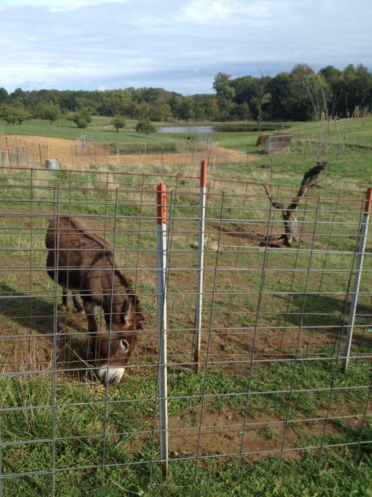 Peach Tree Farm: 24863 Hwy 98, Boonville, MO