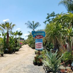 Photo Of Pala Mesa Nursery Fallbrook Ca United States Excellent Inventory