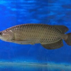 Exotic Aquarium - 161 Photos & 105 Reviews - Pet Stores - 6643