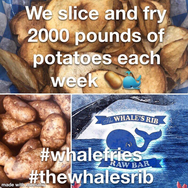 The Whale's Rib
