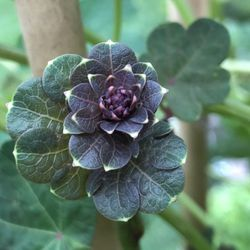 One Green World 31 Photos 24 Reviews Nurseries Gardening