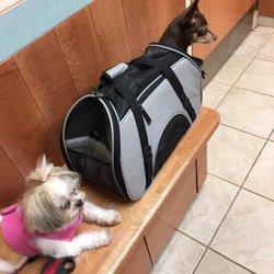 dog boarding panama city beach fl