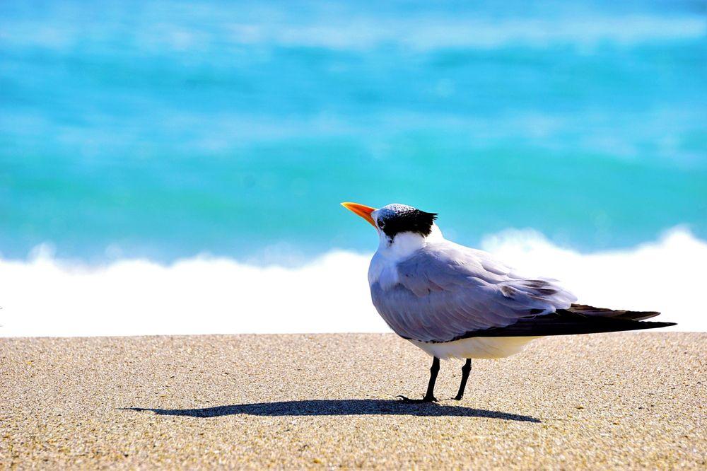 The Melbourne Beach Park: Hwy A1A & Ocean Blvd, Melbourne Beach, FL